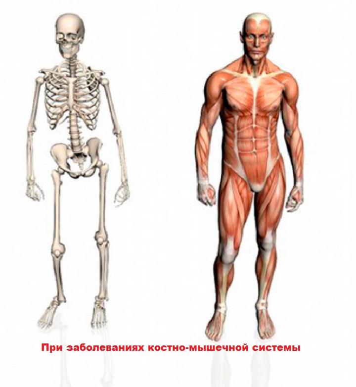 Системы человека: костная, мышечная