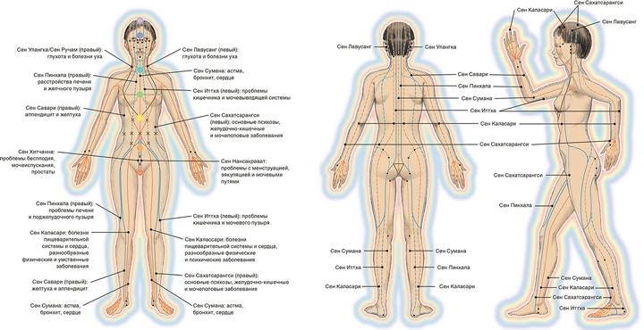 Меридианы у человека