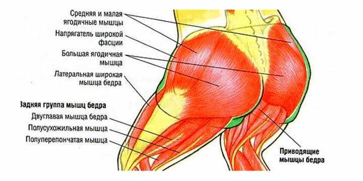 8 ягодичных мышц
