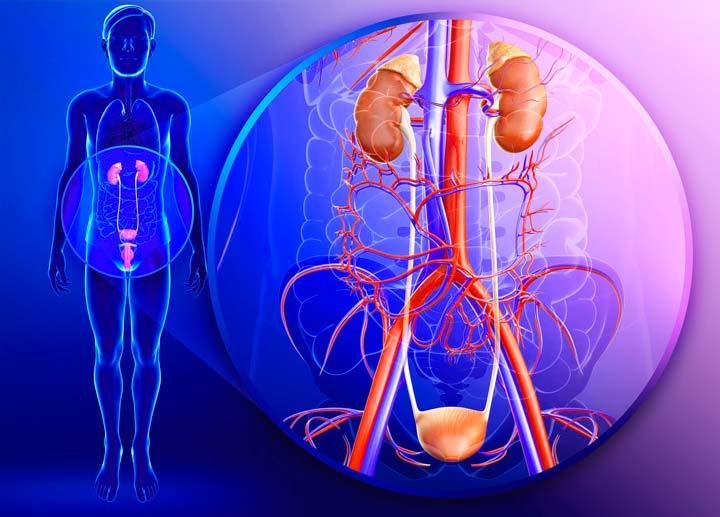 Запрещена роперация на короткую уздечку при заболеваниях мочеполовой системы
