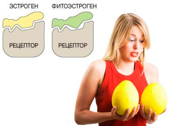 Эстроген и фитоэстроген и объем груди