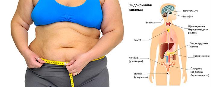Ожирение и гормоны эндокринной системы