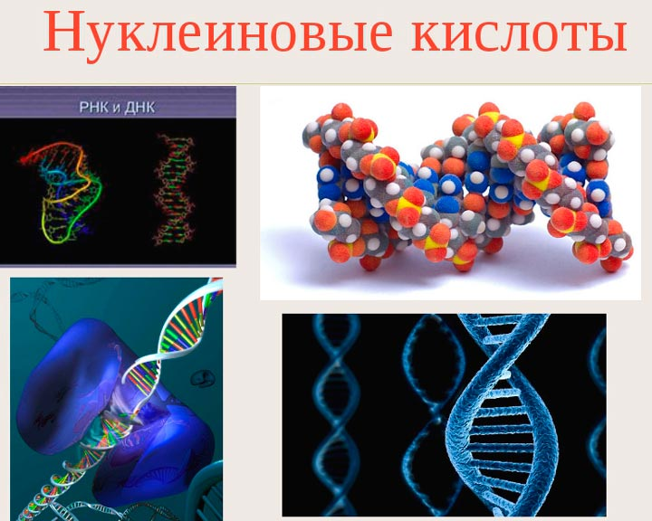 Нуклеиновые кислоты входят в состав Мезоксантина