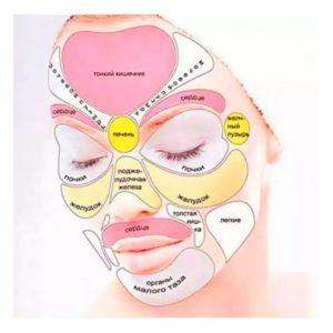 Схема расположения мышц на лице