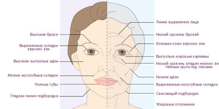Старение и обвисание кожи с возрастом