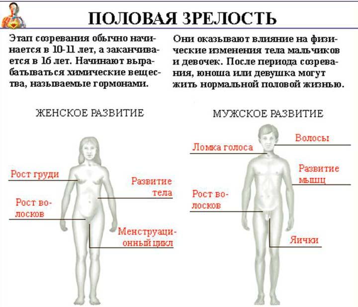 Анатомические особенности развития человека