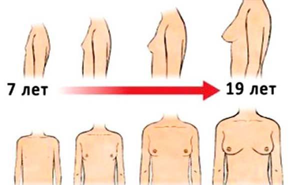Развитие груди у женщин