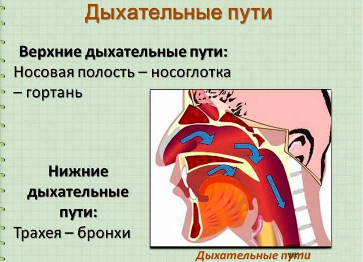 Воспалительные и инфекционные заболевания дыхательных путей
