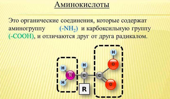 Аминокислоты в составе