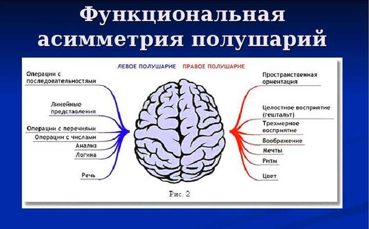 Асиметрия головного мозга