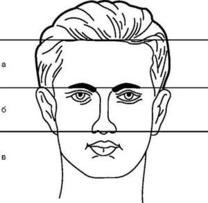 Части пропорции лица
