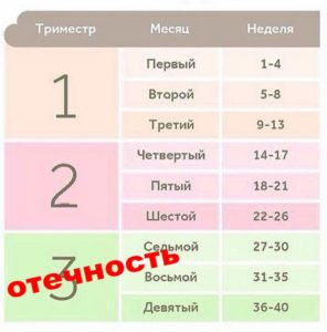 Таблица триместров
