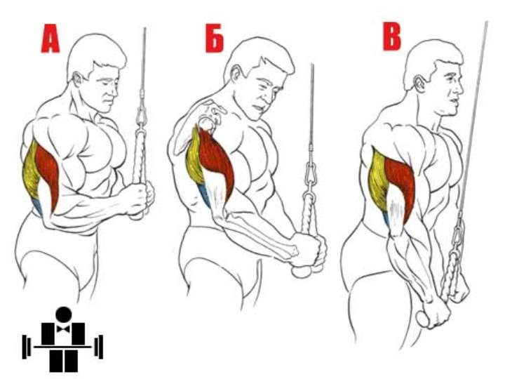 Упражнения против дряблости рук