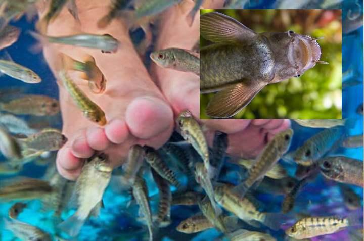 Рыбки для пилинга