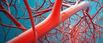 Сосудистый хирург – это доктор, который проводит диагностику, лечение и профилактику болезней вен и артерий
